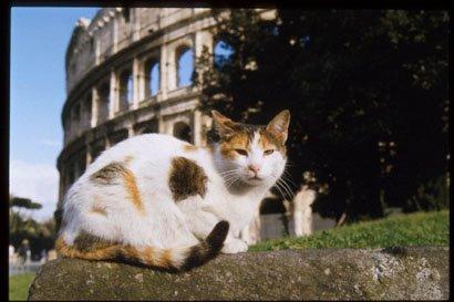 Gatto al Colosseo